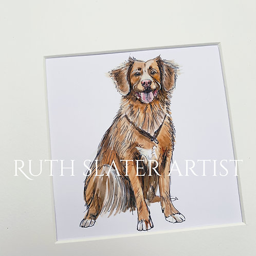Duck Tolling Retriever Original