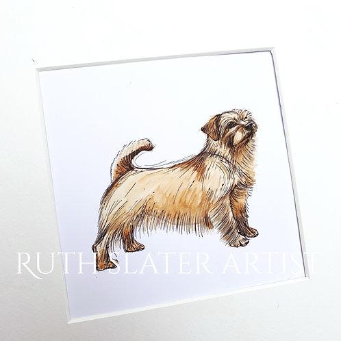 Norfolk Terrier Original