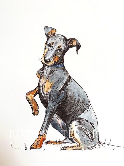Manchester Terrier Original
