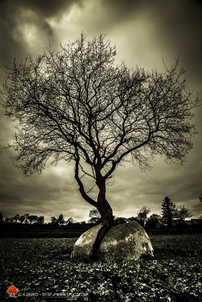 le bois et la pierre