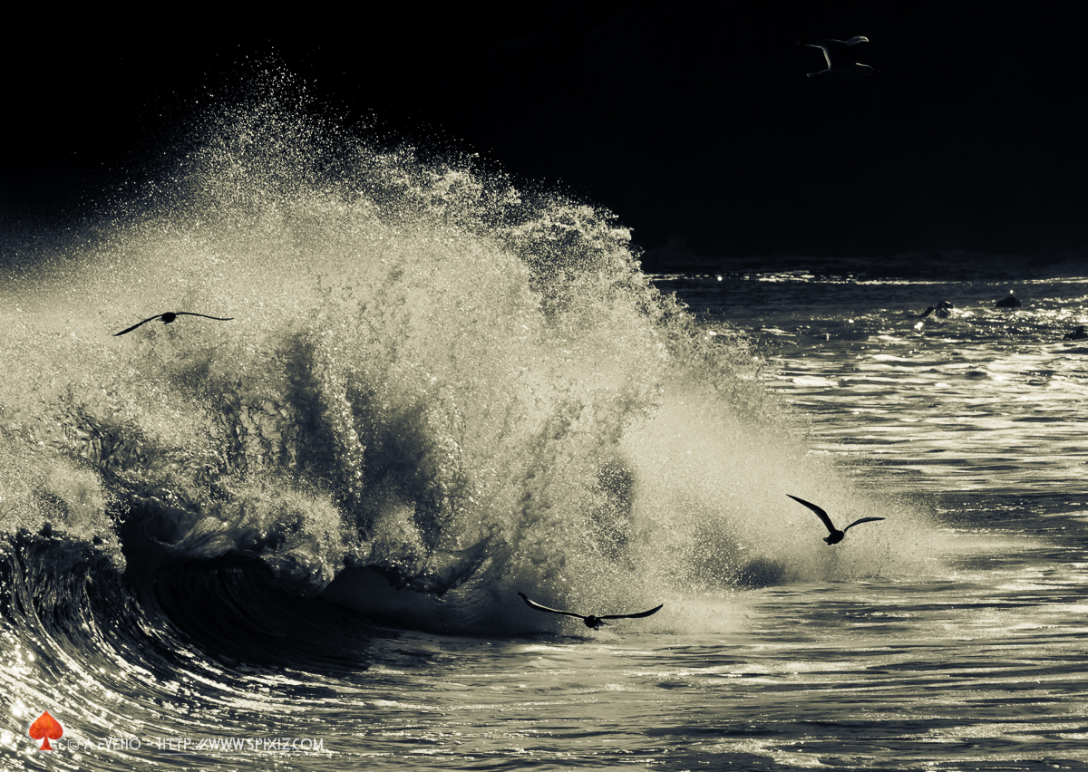 Gulls do like surf