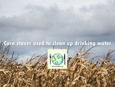 Corn stover used to clean up drinking water