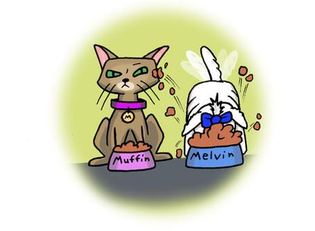A Day in the Life of Muffin: It's a Cat's World!