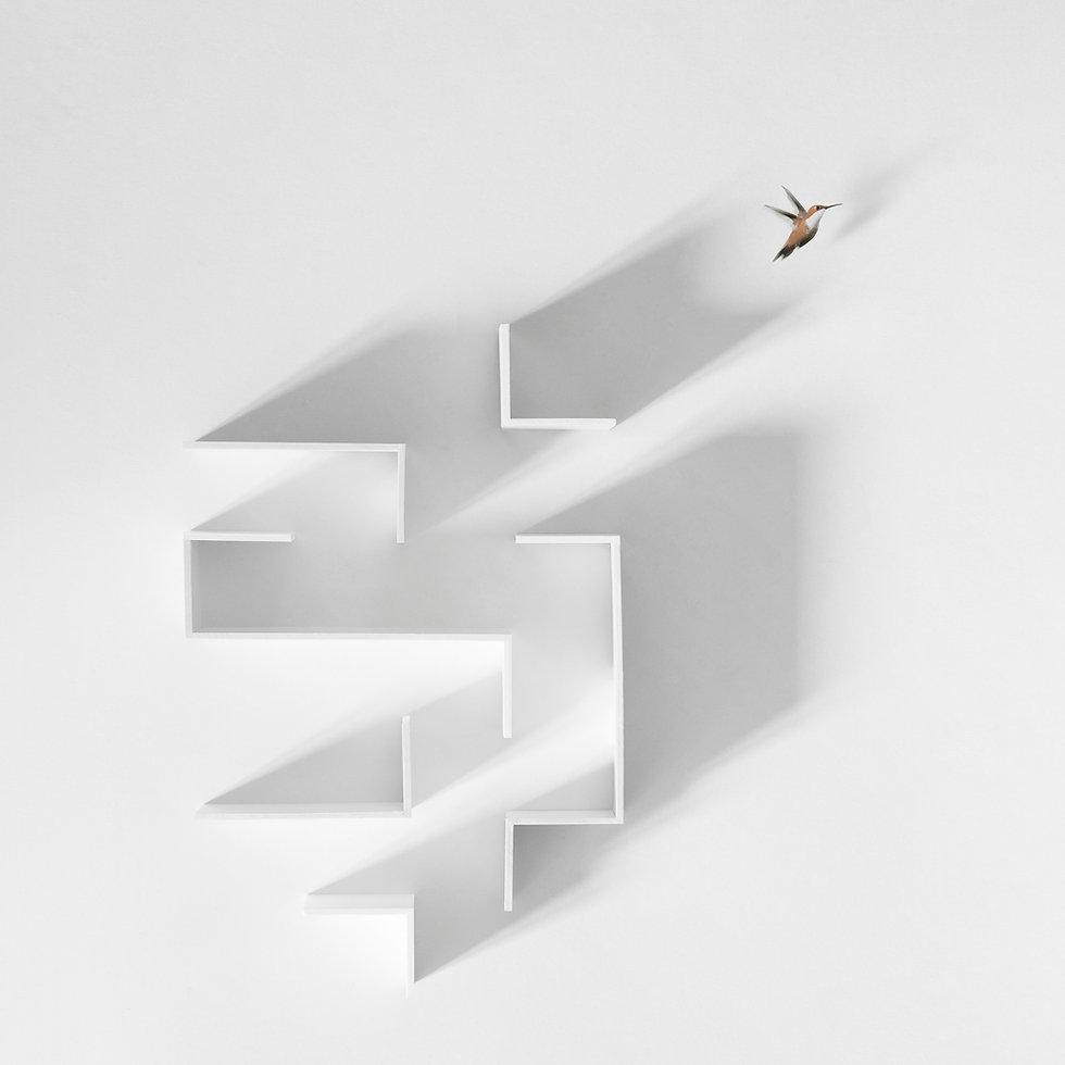 little bird escape out of a maze, freedo