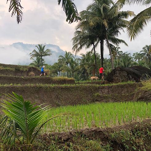 Trekking Central Java