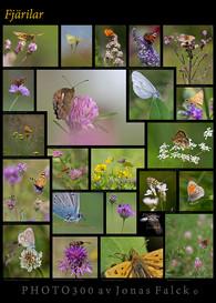 Fjärilsplansch
