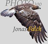 Logga-Photo300Grå66FW2.jpg