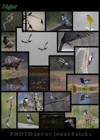 Fågelplansch