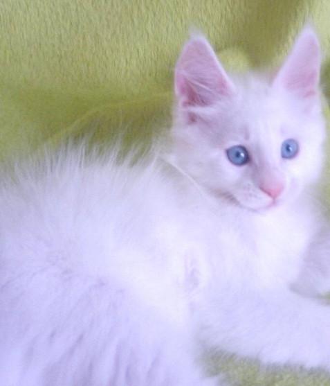 blue eyes 5.jpg