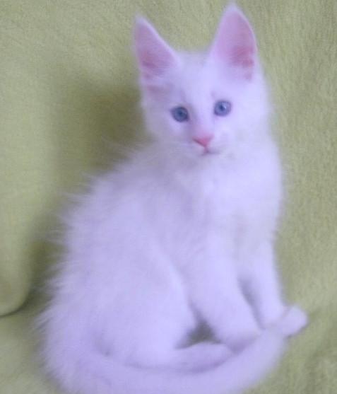 blue eyes 2.jpg
