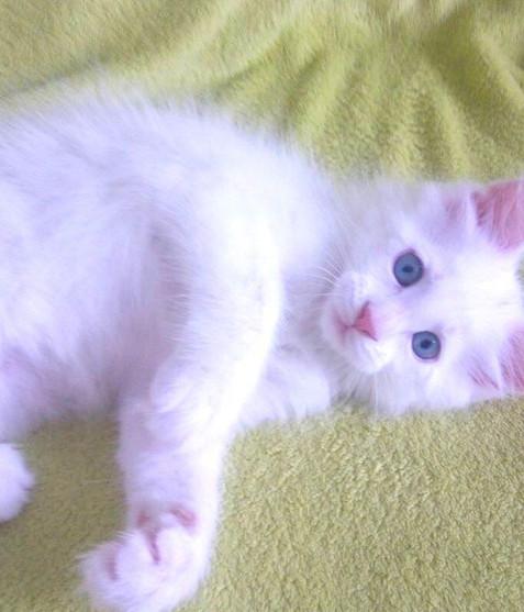 blue eyes 3.jpg