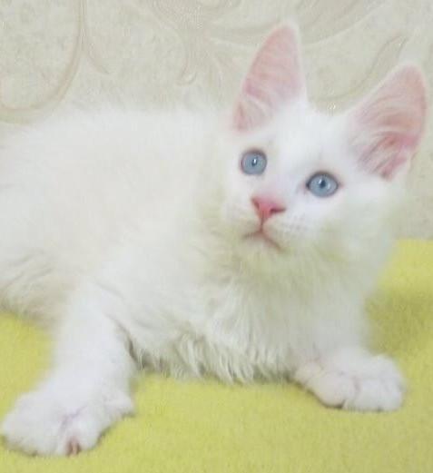 blue eyes 4.jpg