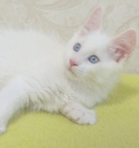 blue eyes 1.jpg