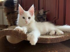 Enchanted Kittens