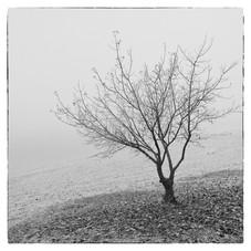 Osamelý strom na brehu jazera v jeseni. Slnečné jazerá v Senci.
