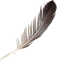 bird-feathers-png-3-png-image-feathers-p