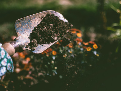 Soil's Role in the Fight for Regeneration