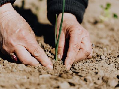 Terra Genesis International: Forging a path of restoration across the planet