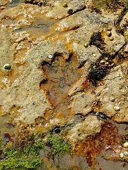 Kildonan dinosaur footprint
