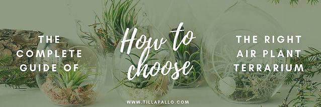 how to choose air plant terrarium
