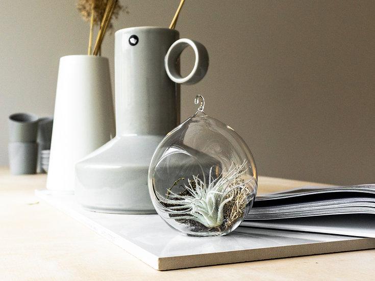Handmade air plant terrarium