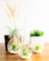 set of terrariums 3