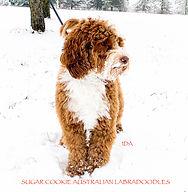 Ida in Snow 2021.jpg