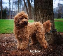 Hudson4%20copy_edited.jpg