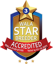 Sugar Cookie WALA Star Logo--0120-01105.