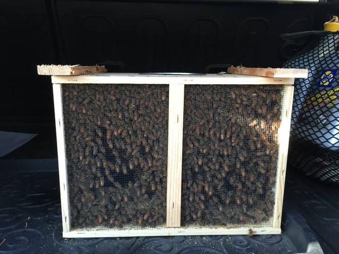 Urban honey collective. Kingfield neighborhood rules!