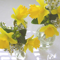 SPRING DAFFODIL PARTY