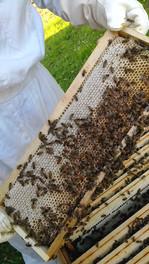 Cadre de miel en cours d'operculation