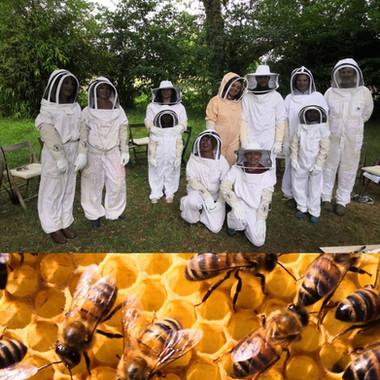 """Les stages """"Découverte du monde des abeilles"""""""