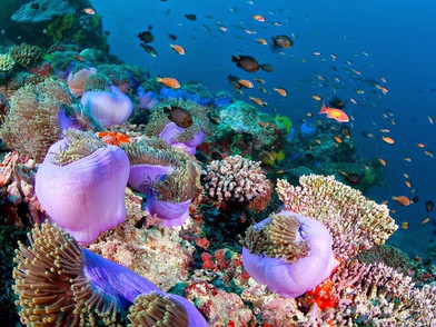 10 Top Places to visit in Maldives