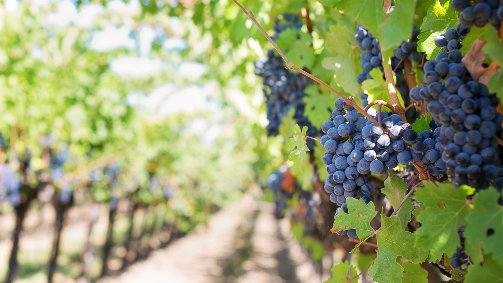 berries-blur-blurry-39351.jpg