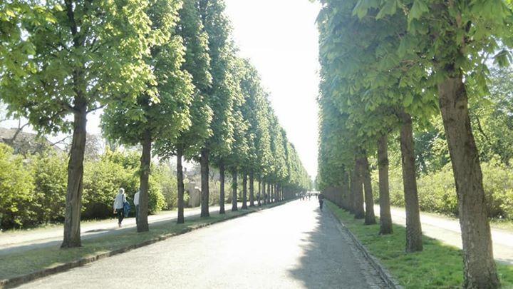 サン・スーシ宮殿公園