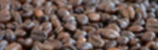 Freshly roasted coffee bean order online