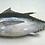 Thumbnail: Bigeye tuna