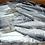 Thumbnail: Spanish Mackerel/Kingfish