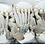 Thumbnail: Blue Swimming Crab