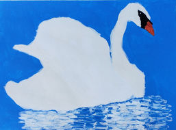 The Most Beautiful Swan You Ever Seen