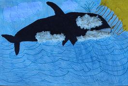 Shamu From Seaworld