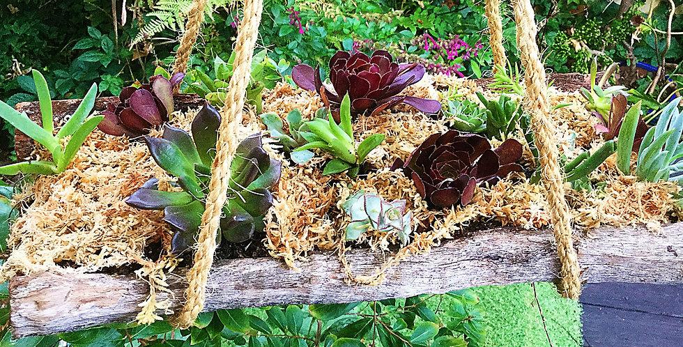 Succulents in a Swing