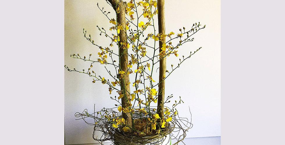 Orchids nest