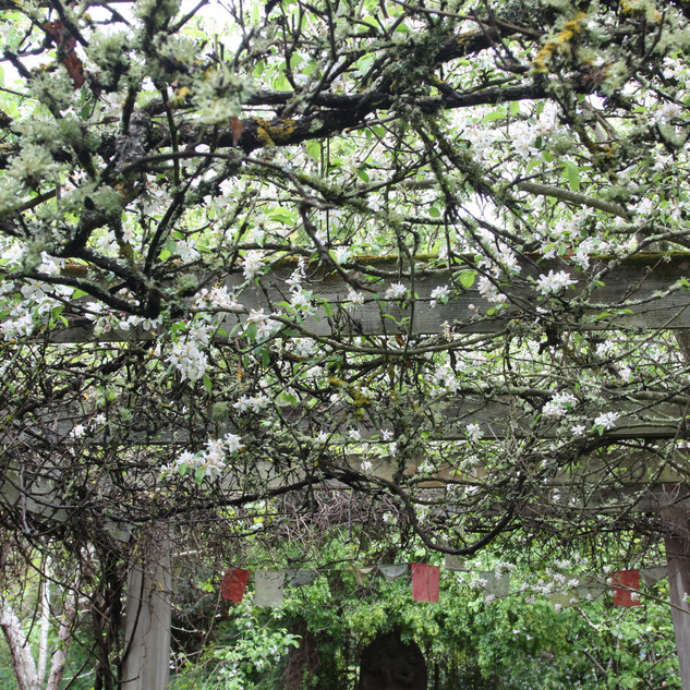 branches shaped by growth with an arched path