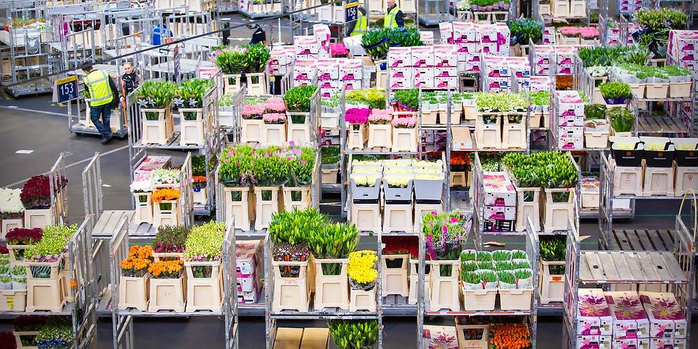 Visit the Royal Flora Flower Auction
