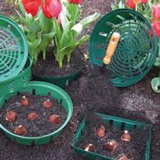 MMN Flower Bulb Basket Workshop