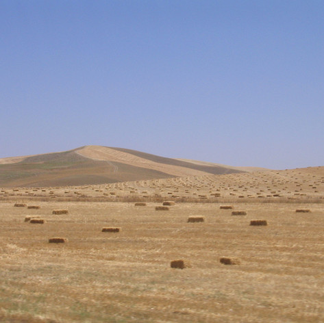 Fields of Hay Bales