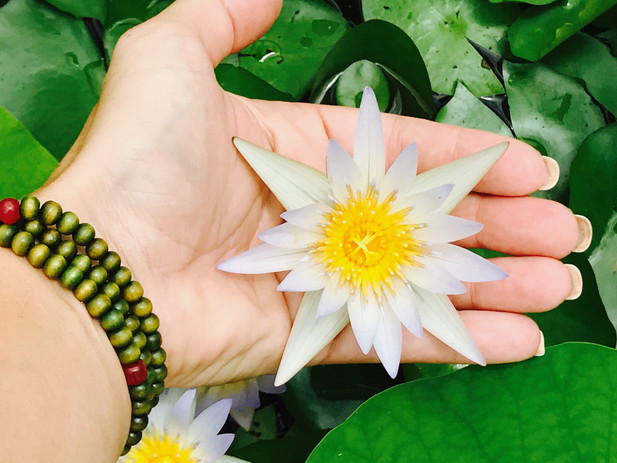 """""""Just like the lotus, we too have the ability to rise from the mud, bloom out of the darkness and radiate into the world"""" Unknown"""