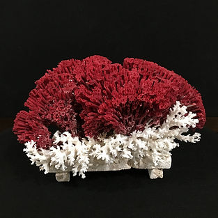 Coral-Red.JPG